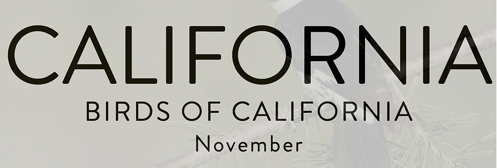 Birds of California | Nov 15-18, 2023 | $5000