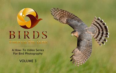 (a) Birds Through The Lens Vol.3