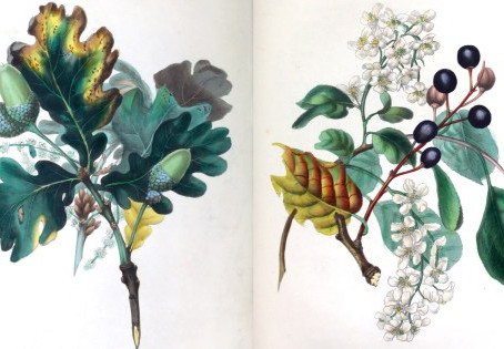 The Spirit of the Woods: Poet and Painter Rebecca Hey's Gorgeous 19th-Century Illustrations for the