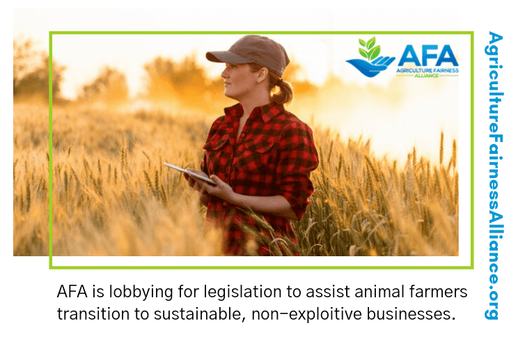 Animal Agriculture Subsidies and how to end them