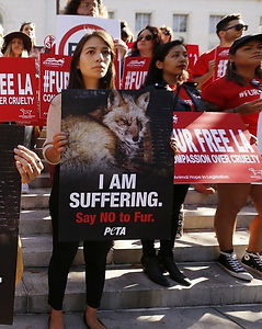 Protesters stand in front of a city govenment building with animal signs protesting the sale and production of fur