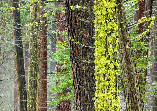 Mossy Forest 1