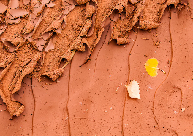 Fading Fall Color