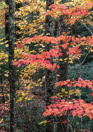 The Reds of Fall
