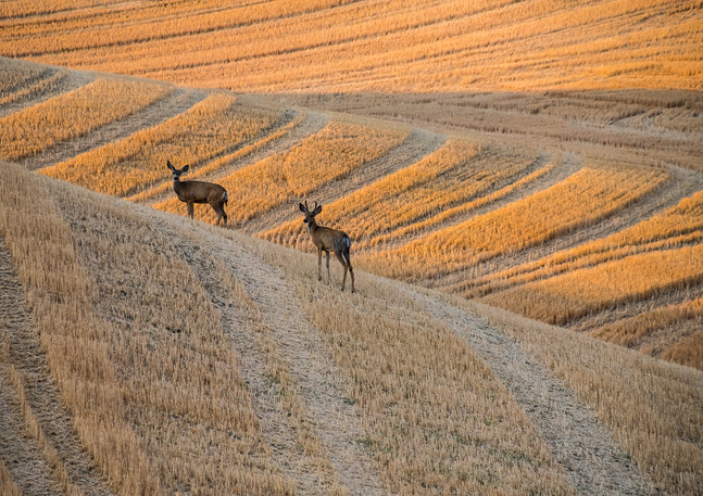 Harvest Spectators
