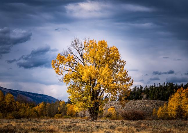 Teton Meadow 4