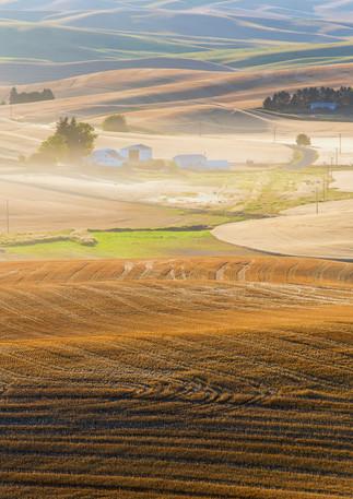 Golden Harvest 6