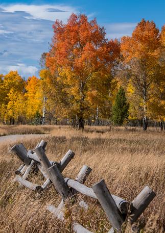 Teton Meadow 3