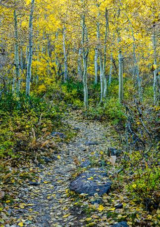 Trust the Trail...