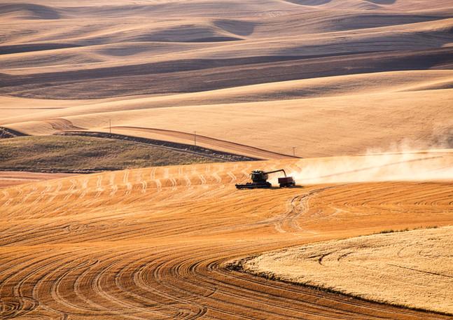 Golden Harvest 3