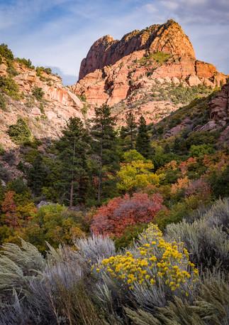 Kolob Canyon Fall Color