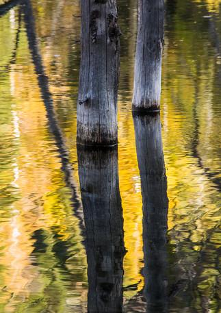 Golden Light Reflections