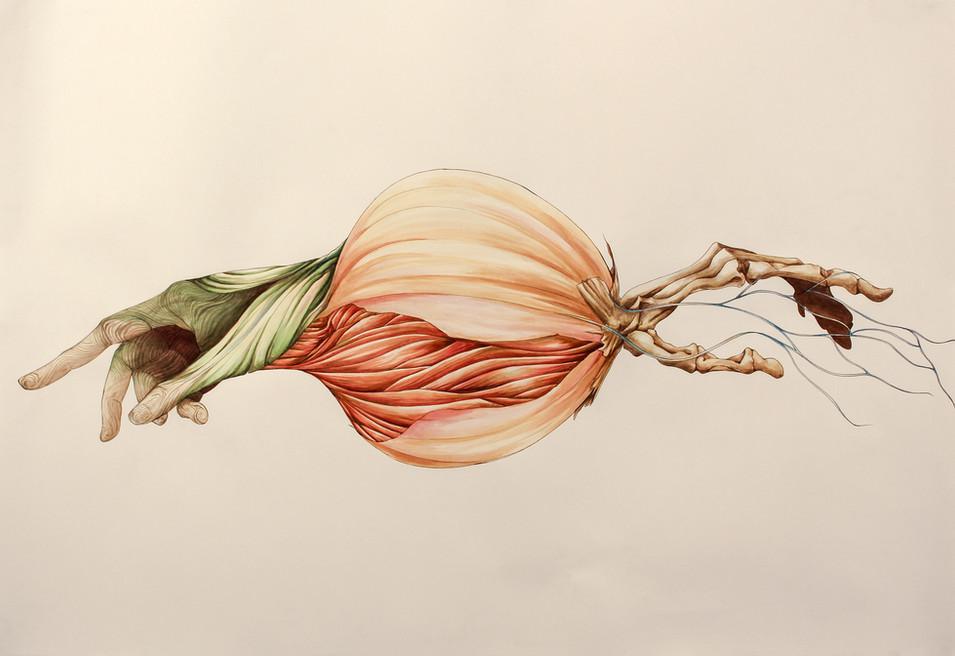 Onion Hand