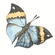 butterflyicon.png