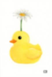 duckydaisy.png