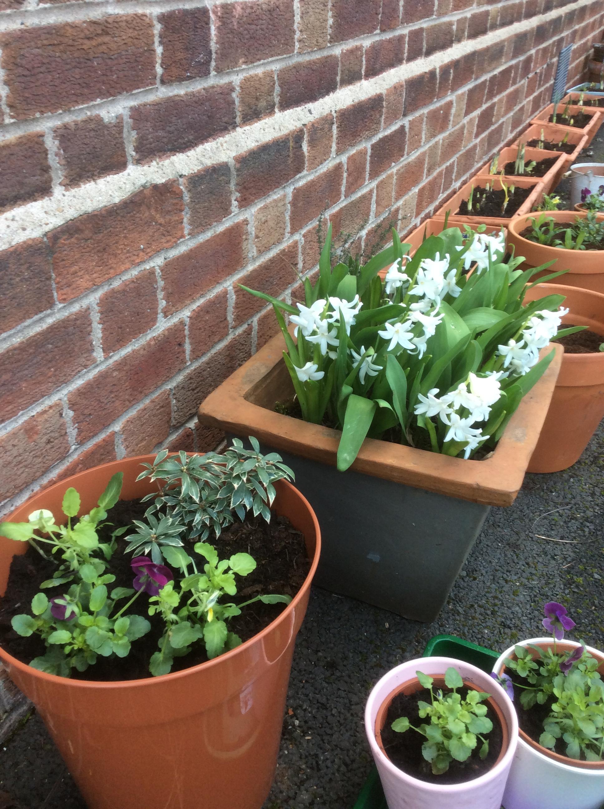 Horticulture4