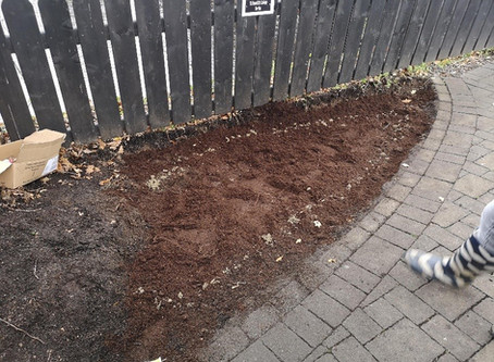 Tulip Planting With Tidy Randalstown