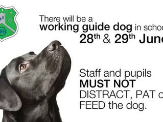 Working Guide Dog