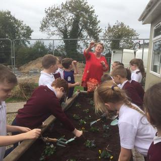Year 4 begin their gardening project