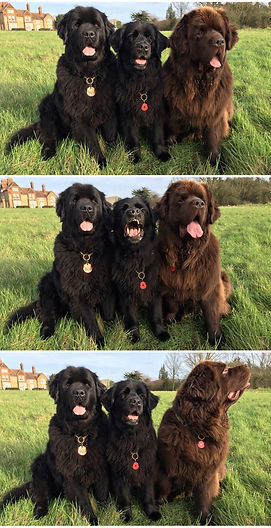 Canine Massage in Essex