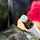 Thumbnail: Ginger Jade Rose     Healing Tonic