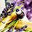 Thumbnail: Blue Lemongrass | Anxiety Tonic