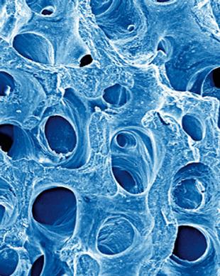 biomaterials.png