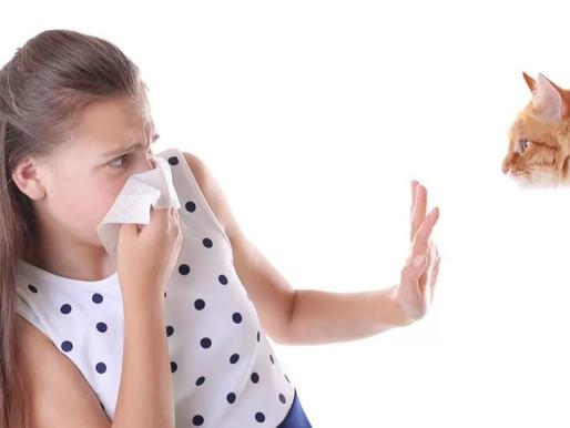 Аллергия на кошек у людей: причины, симптомы и лечение