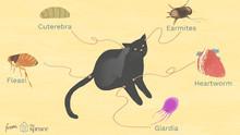 Какие бывают паразиты у кошек?