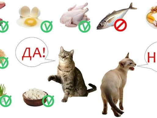 Увеличение лактации кошек в период грудного вскармливания у кошек породы уральский рекс