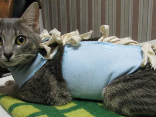 Стерилизация: возраст, методы и плюсы стерилизации кошек