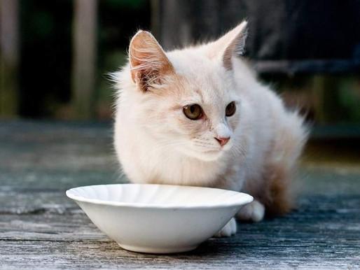 Корм для кошек и котят: все о том, как кормить своего домашнего любимца