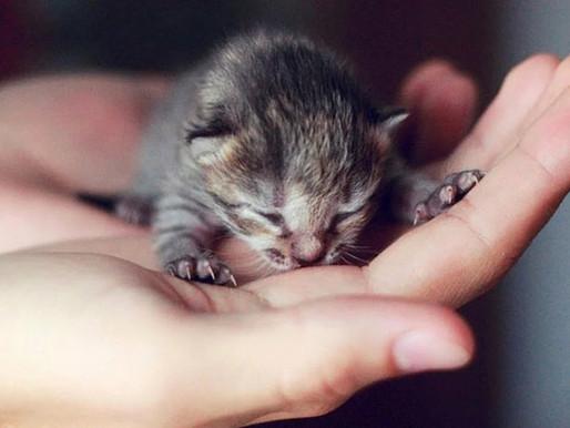 Как и чем кормить слабых котят, выкармливание котят, советы врача.