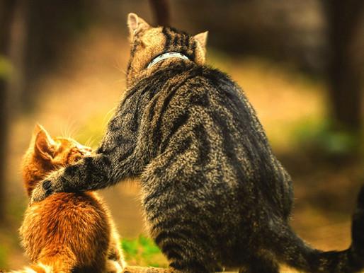 Возраст кошек, сколько лет кошке.