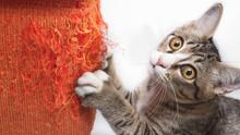 Как быстро отучить кошку драть мебель и обои? Самые эффективные советы и методы решения проблемы