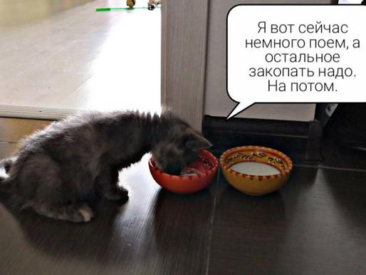 Почему кошка закапывает миску с едой и что с этим делать?