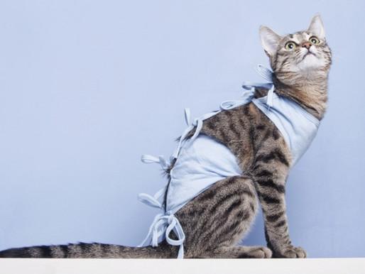 Какой должен быть уход за кошкой после операции?