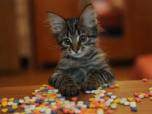 Таблетки для кошек: что должно быть в домашней аптечке Вашего питомца?