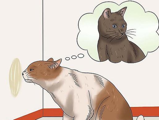 Кошачьи метки: что это такое, какие они бывают, что означают и как с ними бороться?