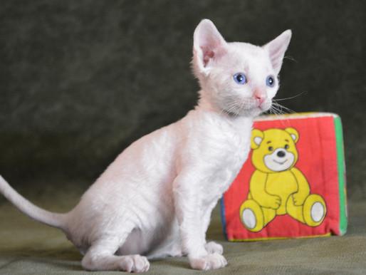 О самом главном: где купить котенка, сколько стоит котенок и как выбрать домашнего любимца.