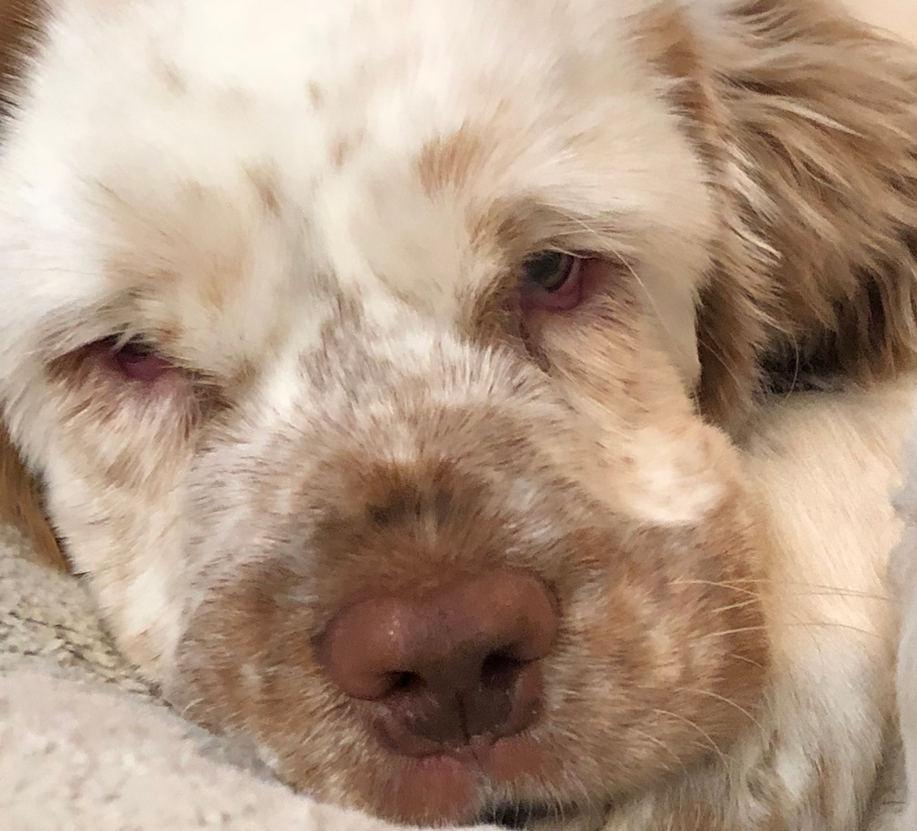 Daisy puppy head.jpg