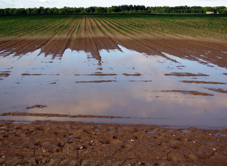 Poor Spring Planting Conditions
