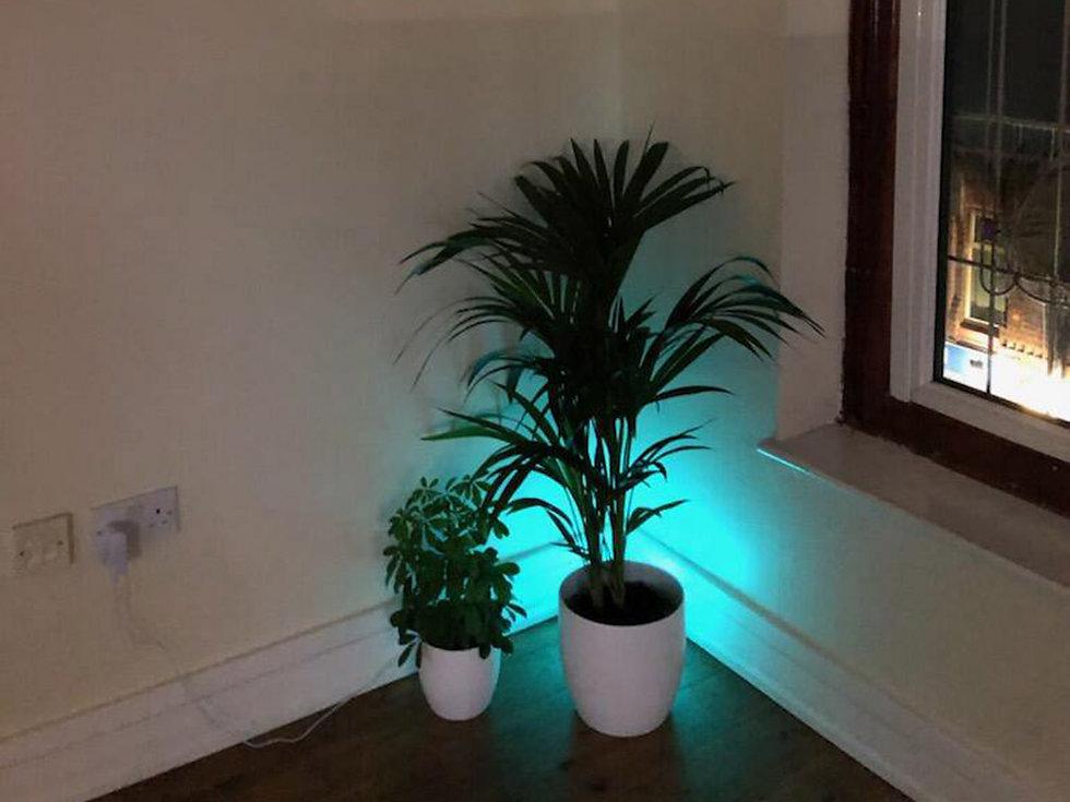 Plants in the corner of The Yoga Bank Studio