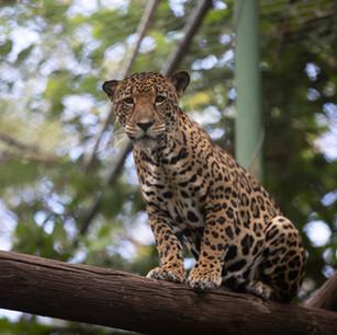 La desconexión del ser humano con la fauna silvestre y su impacto en los animales.