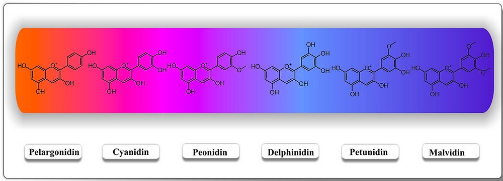 Different types of anthocyanins. Colors change based on hydroxylation, glycosylation, acylation patterns (source: IntechOpen)