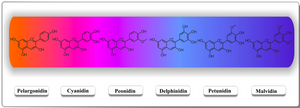 Different types of anthocyanins. Colors change based on hydroxylation, glycosylation, acylation patterns (source: IntechOpen)