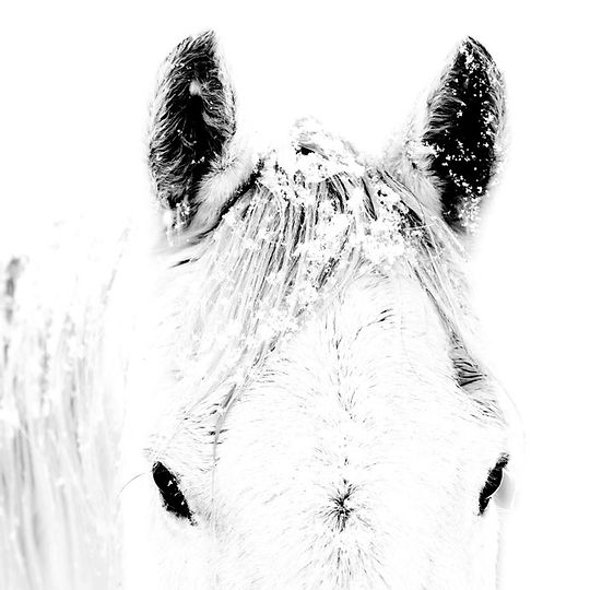 Blanco-3.jpg