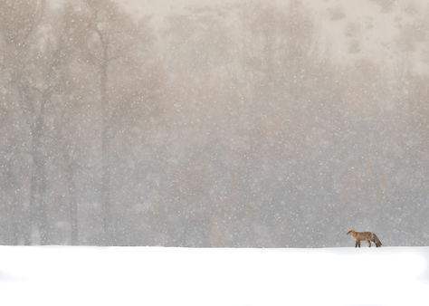 Foxy Final_.jpg