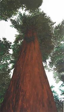 Redwoods, 2015