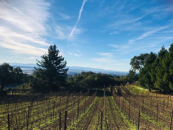 El Vaquero Vineyard View.jpg